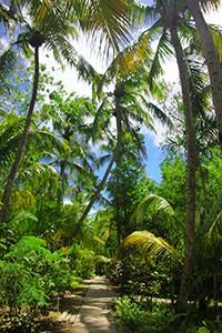 blog-coconut-grove